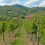 Luxury Escape Tuscany | Wine Tasting Chianti