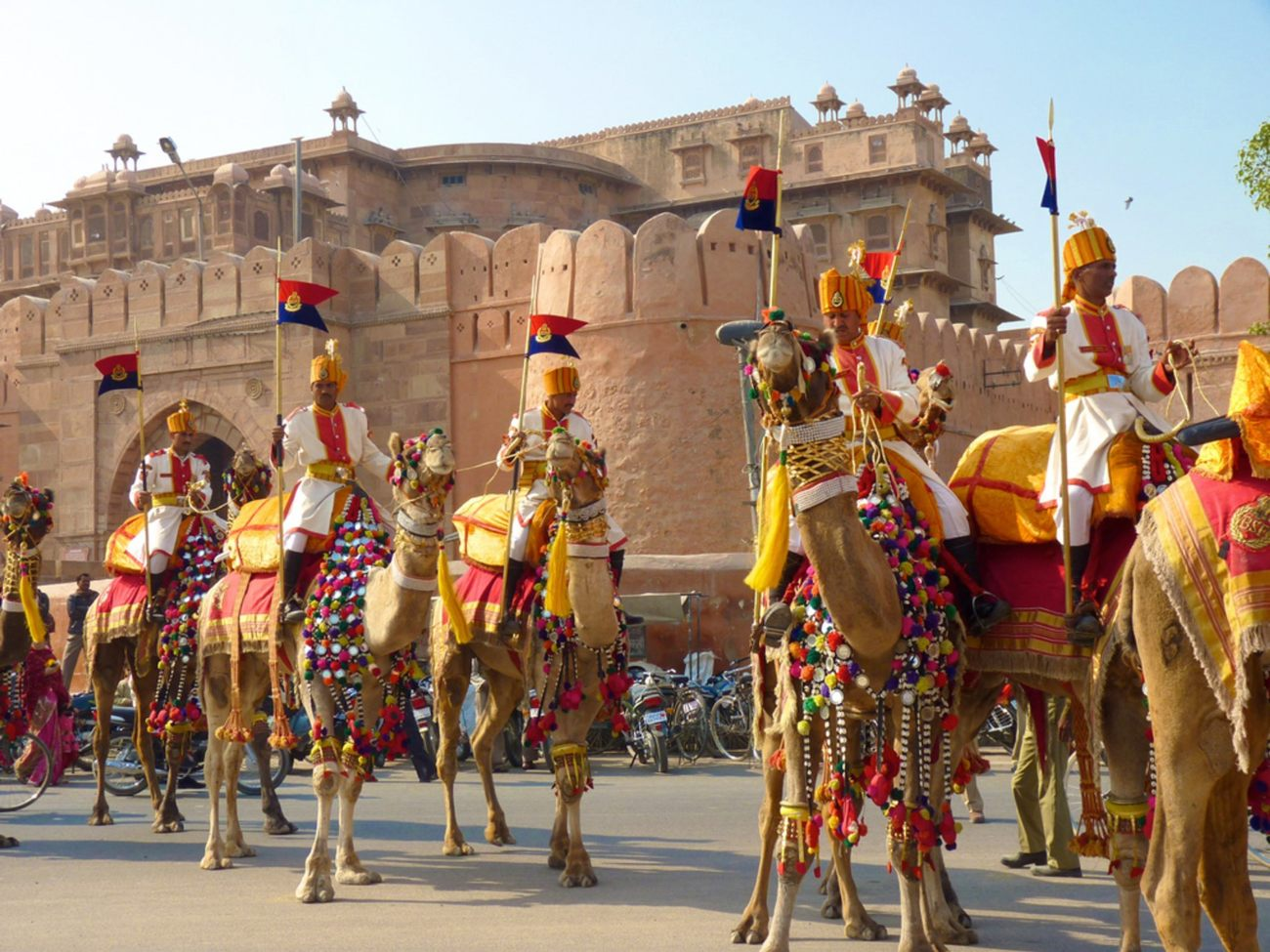 India Bikaner Camel