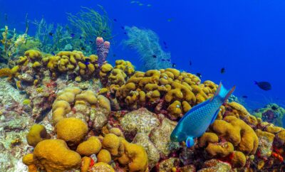 10 Best Places to go Snorkeling in Turks and Caicos